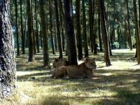 k-serengeti114